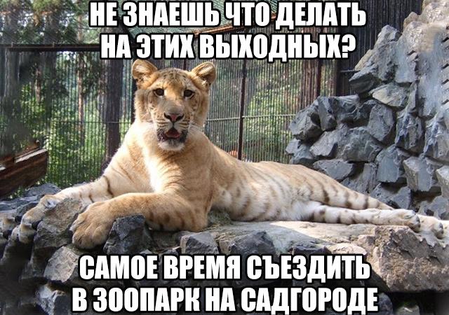 7-нов